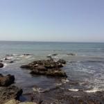 Gabbiani e cormorani